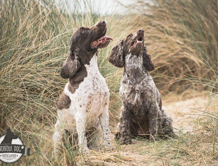 Protected: Bo Bailey & Tallulah May