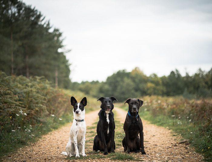 Mack, Lola & Caspar
