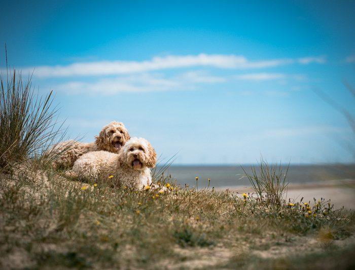 Charly & Bea Bea